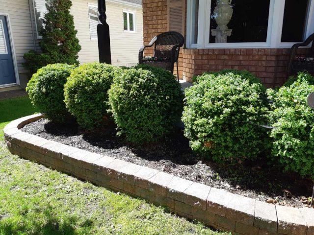 flowerbuds-hedges